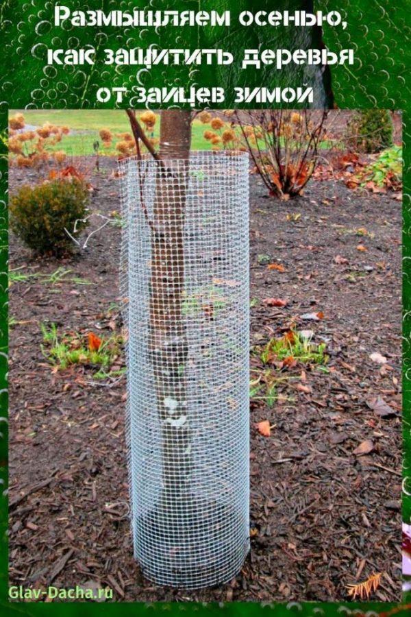 как защитить деревья от зайцев зимой