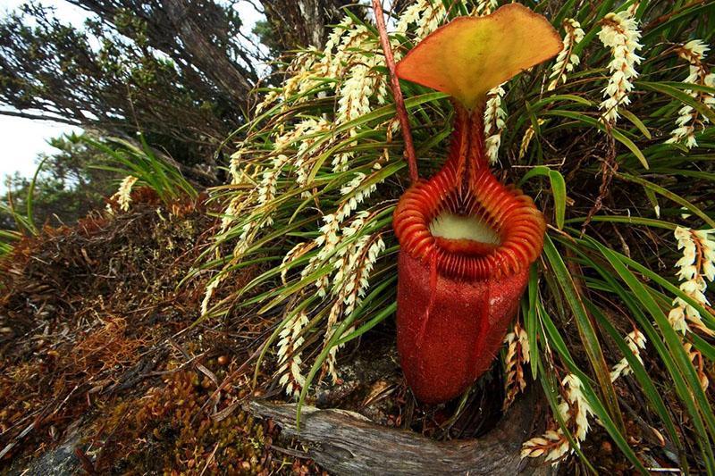 растение удивительной красоты