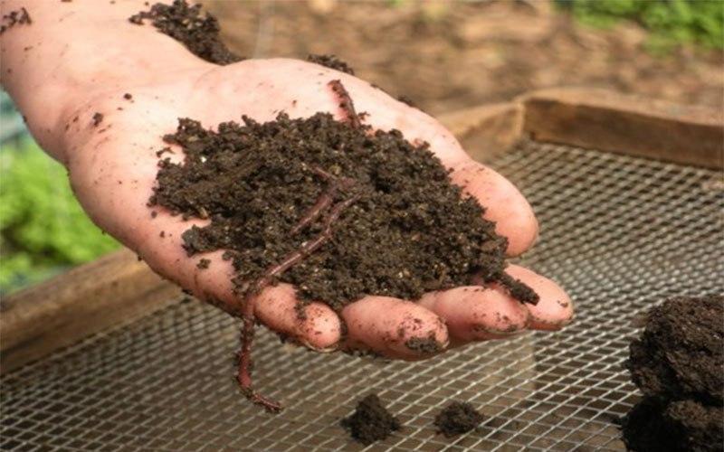 биогумус производство в домашних условиях