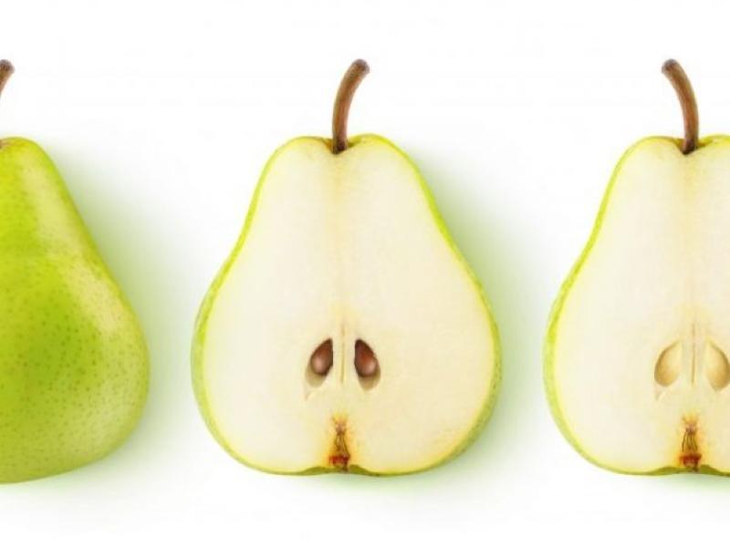 плоды груши аннушка