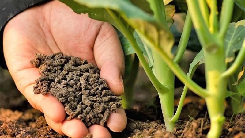 внесение удобрения в почву