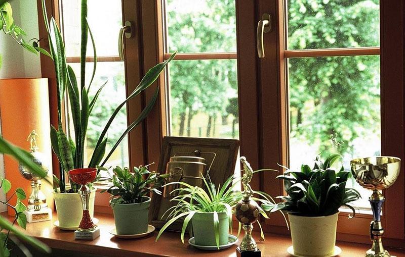 костная мука для комнатных растений