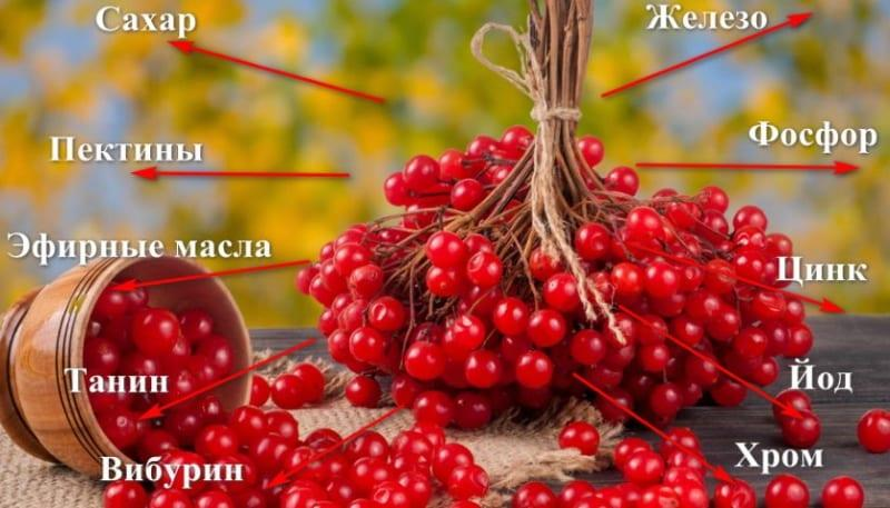 состав ягод калины