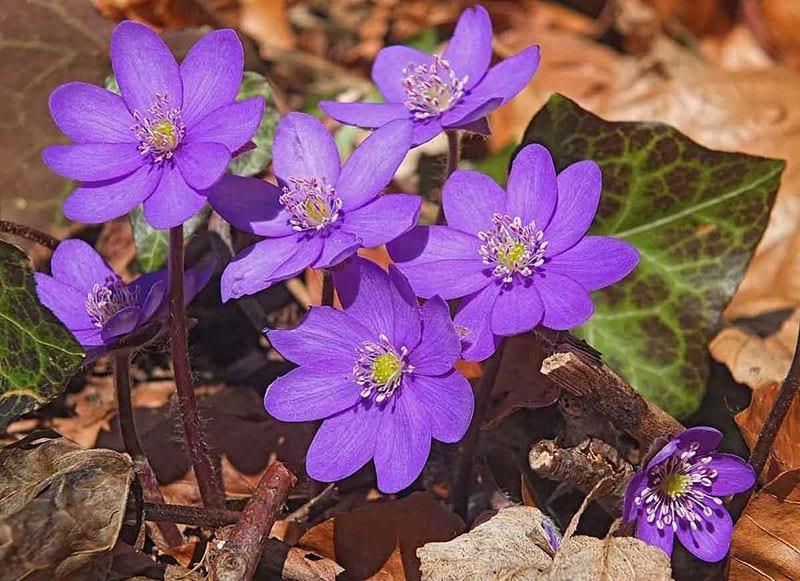 раннее весеннее растение