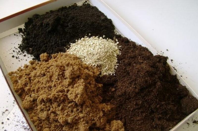 почва с опилками для рассады томатов