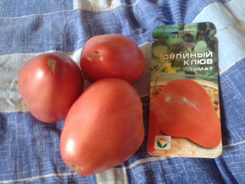 томат орлиный клюв отзывы фото