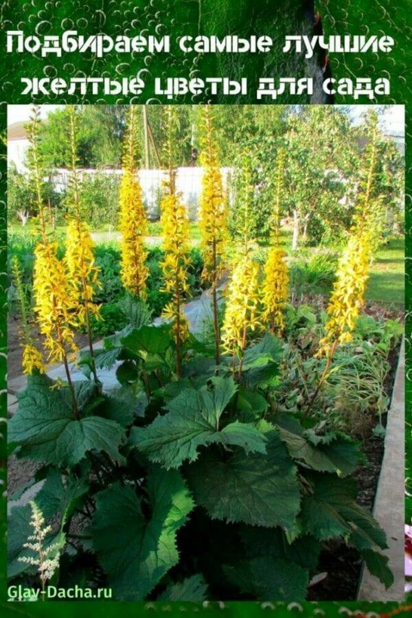 желтые цветы для сада