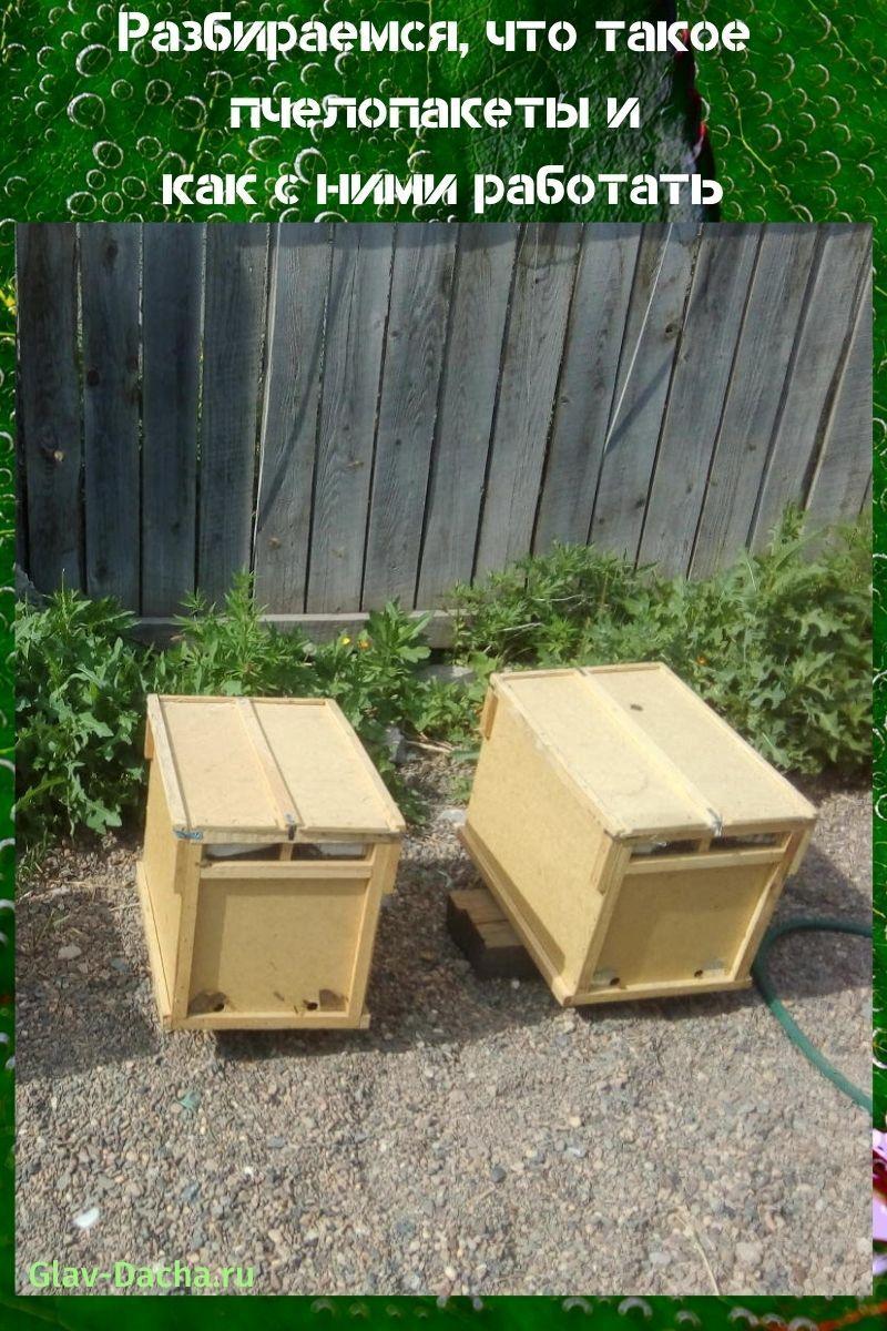 что такое пчелопакеты