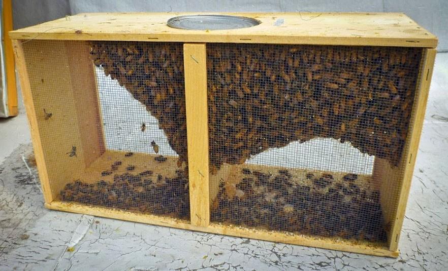 подготовка пчелопакета