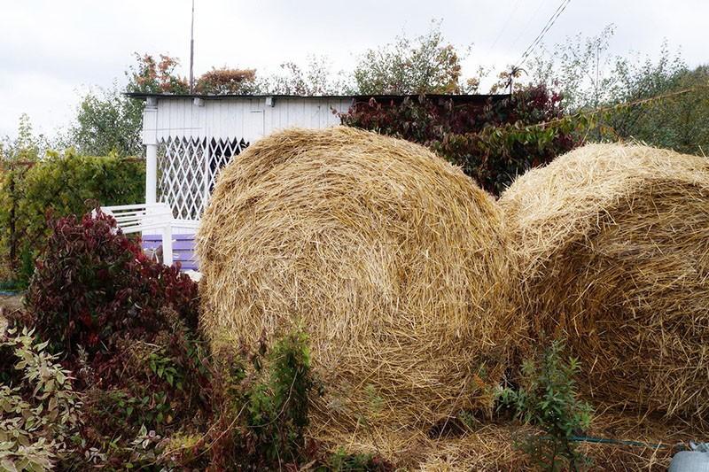 использование соломы на огороде