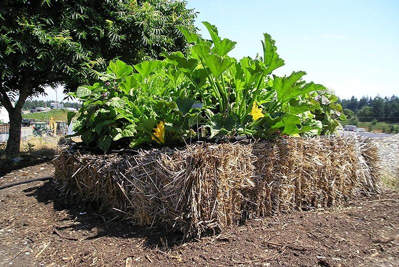 выращивание овощей на соломенной грядке