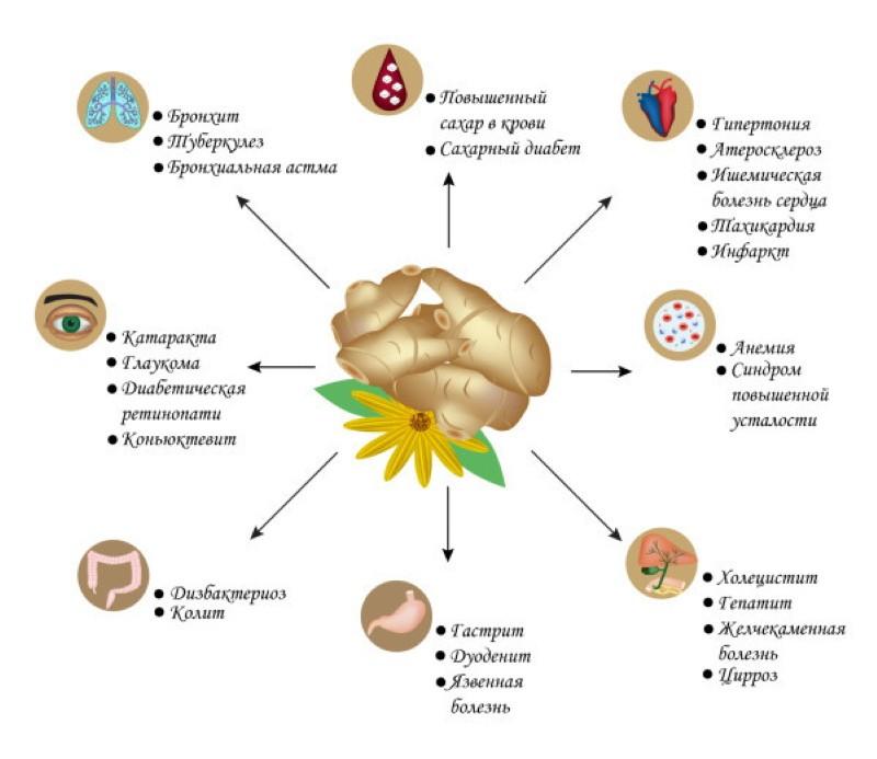 при каких болезнях полезен топинамбур