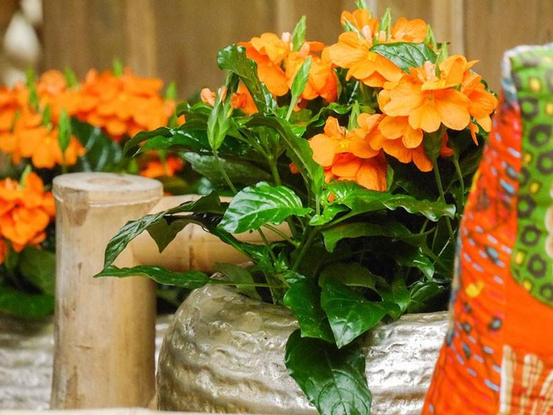 условия содержания растений