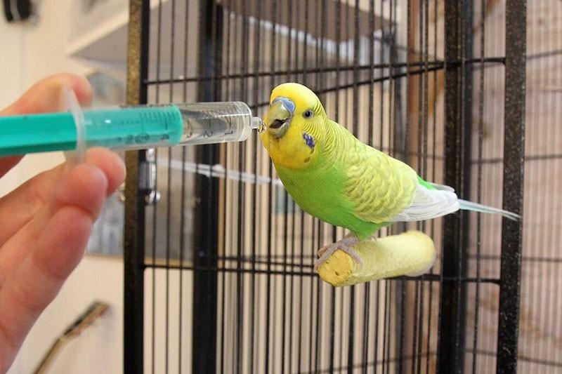 катозал для попугаев