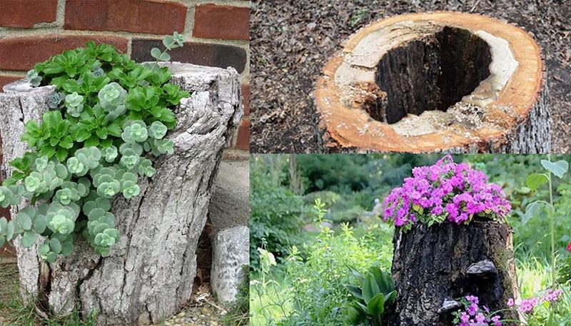 как украсить пень от дерева