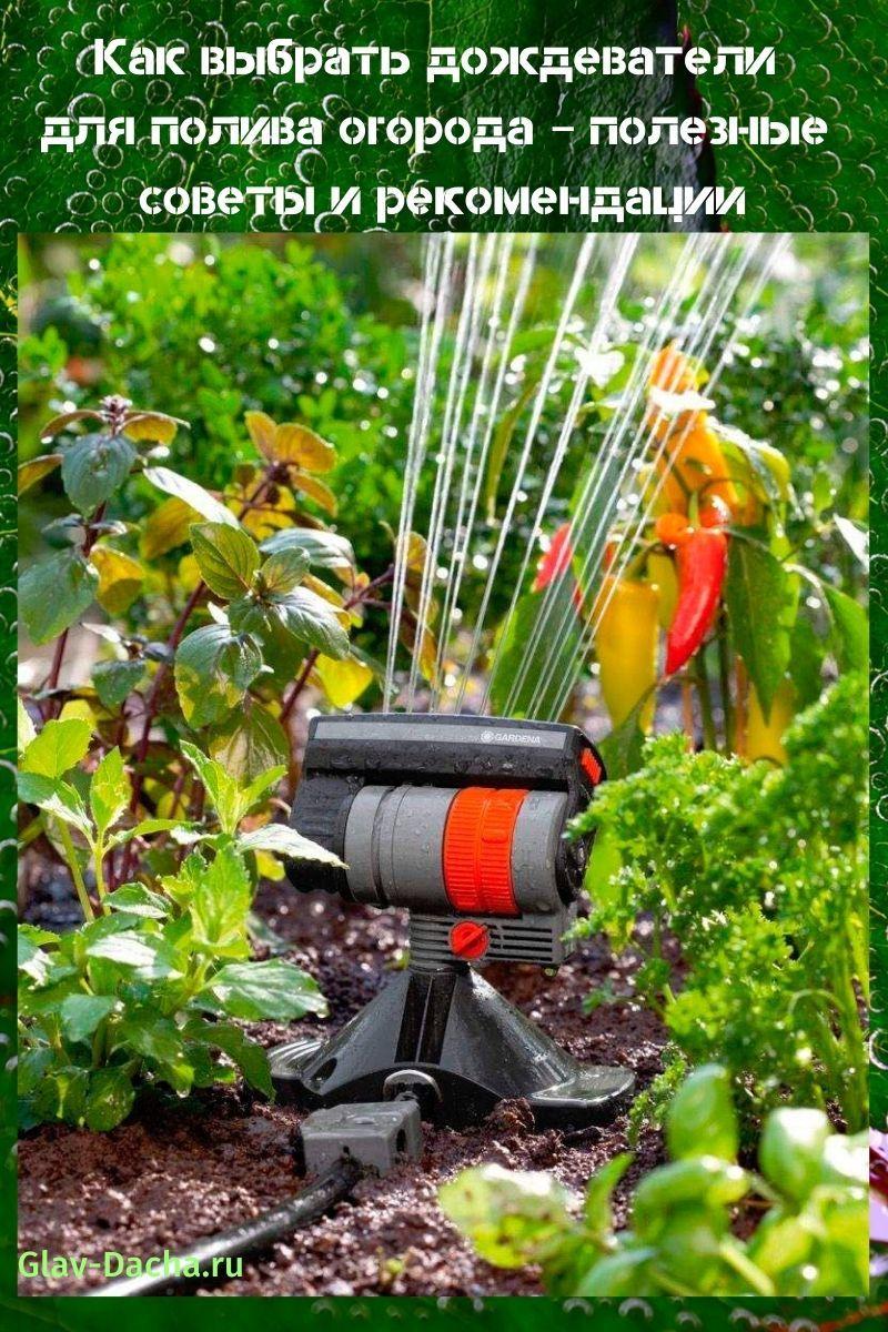 Как выбрать дождеватели для полива огорода
