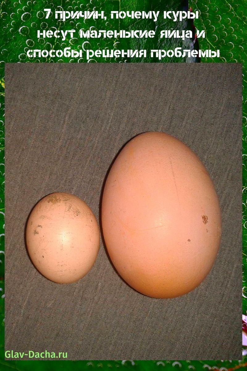 почему куры несут маленькие яйца