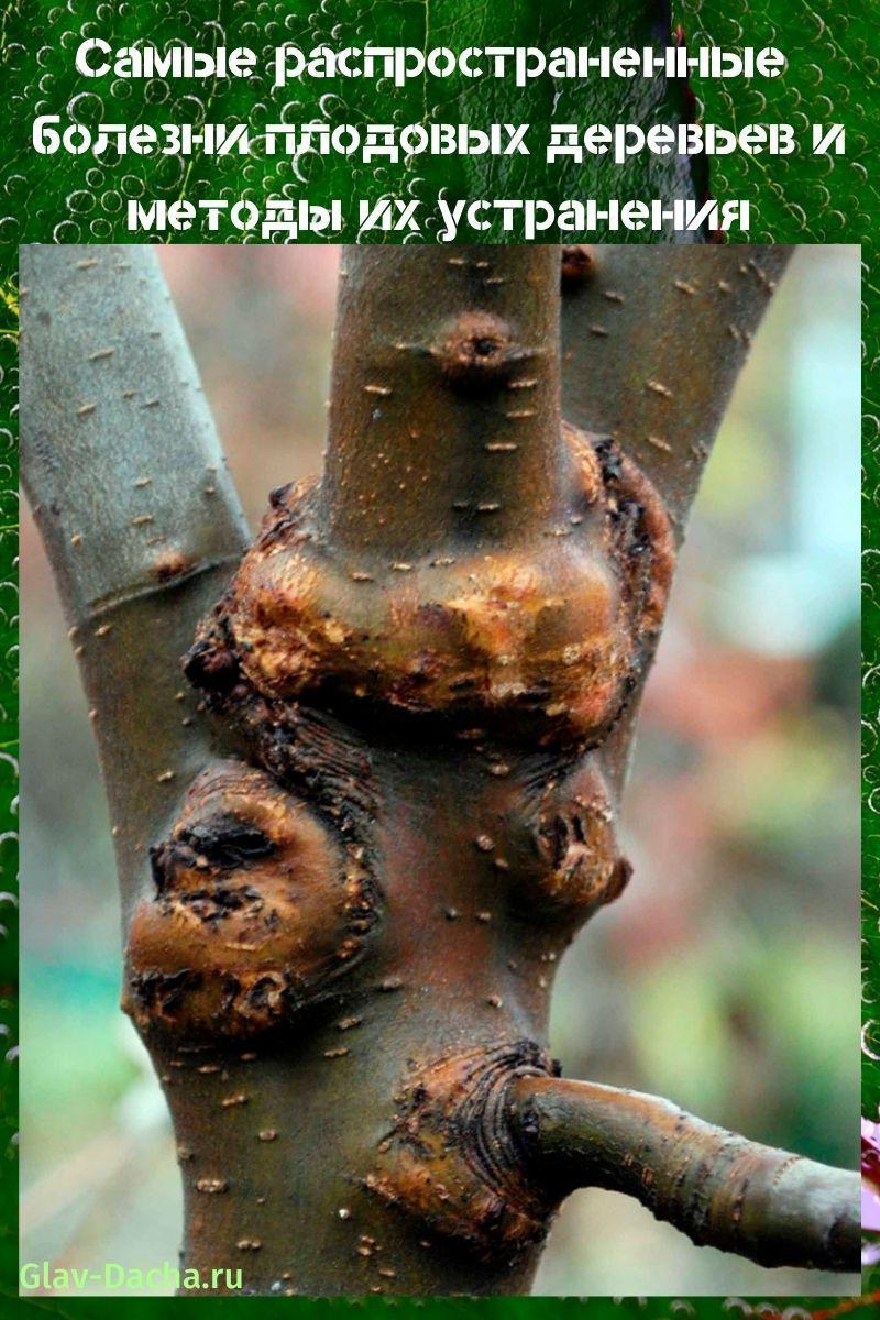 болезни плодовых деревьев