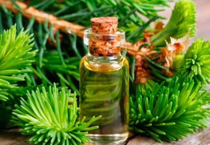 масло сосны свойства и применение