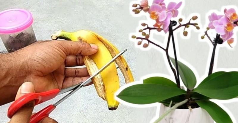 полезные свойства банановой кожуры как удобрения