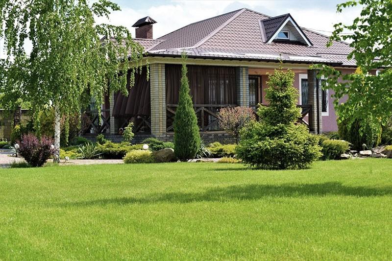 газонная трава лилипут на дачном участке