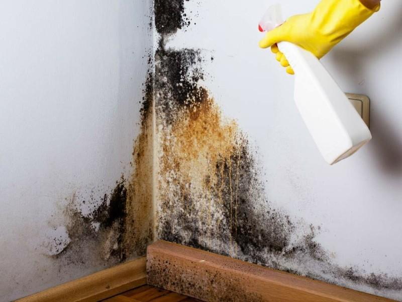 грибок альтернария на стене