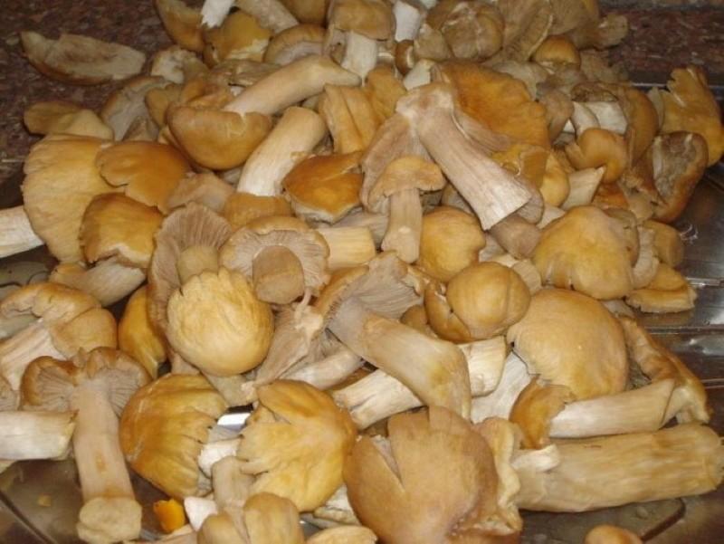 рецепт маринованных грибов курочек