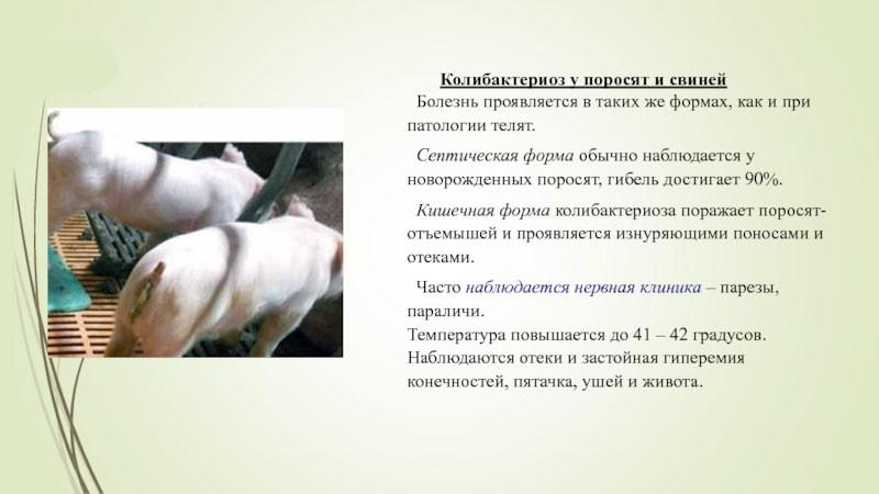 формы колибактериоза