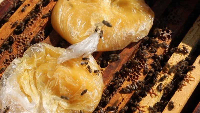 как подкормить пчел старым медом