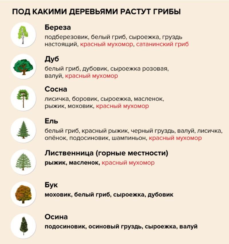 где искать разные грибы