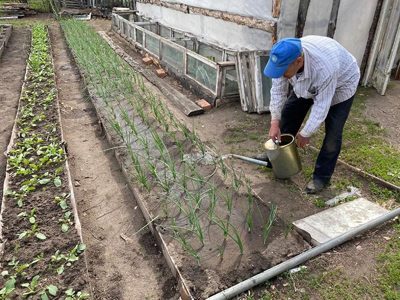 проводим полив лука в открытом грунте