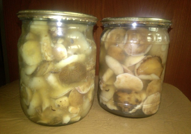 помутнели грибы маринованные