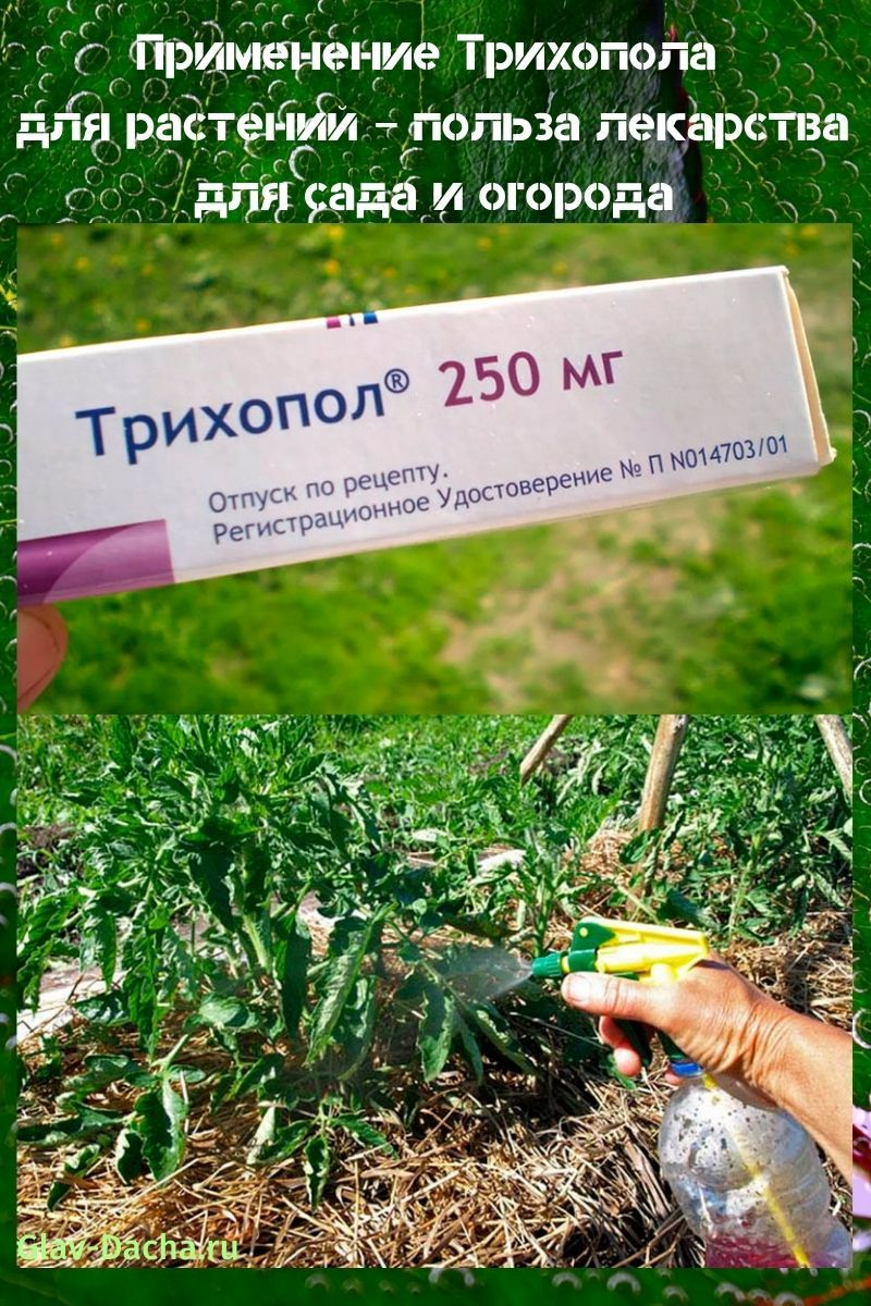применение трихопола для растений