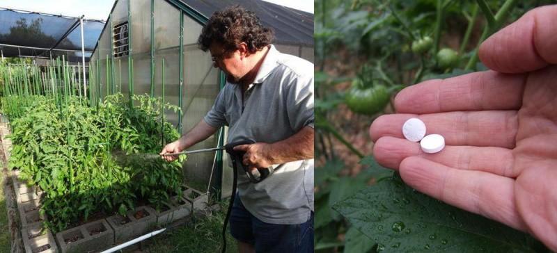 рецепт раствора для обработки растений