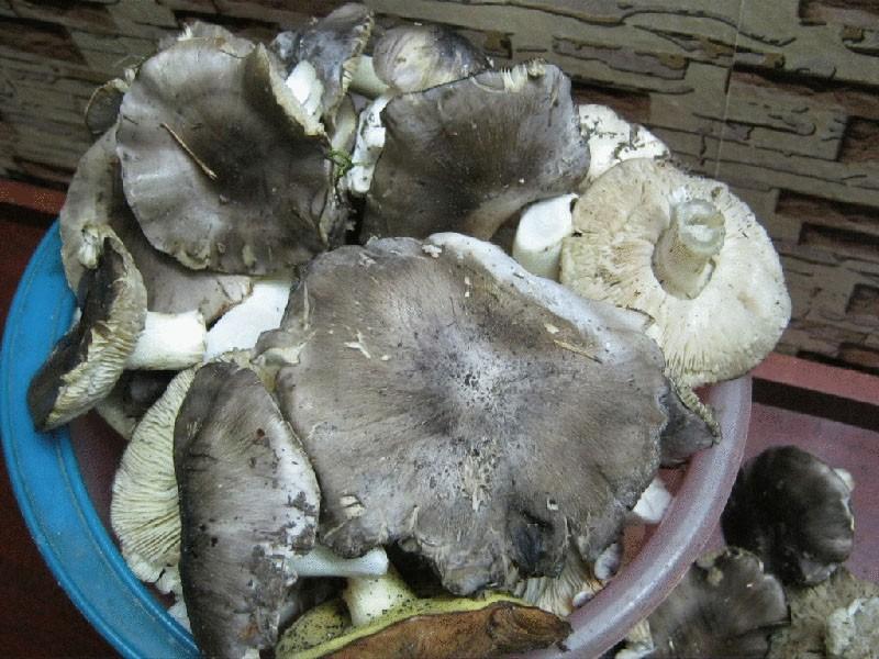 мыть грибы