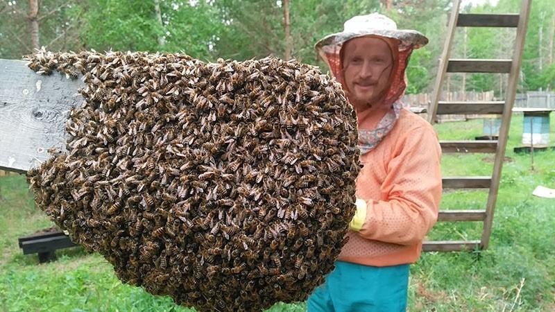 обнаружено роение пчел