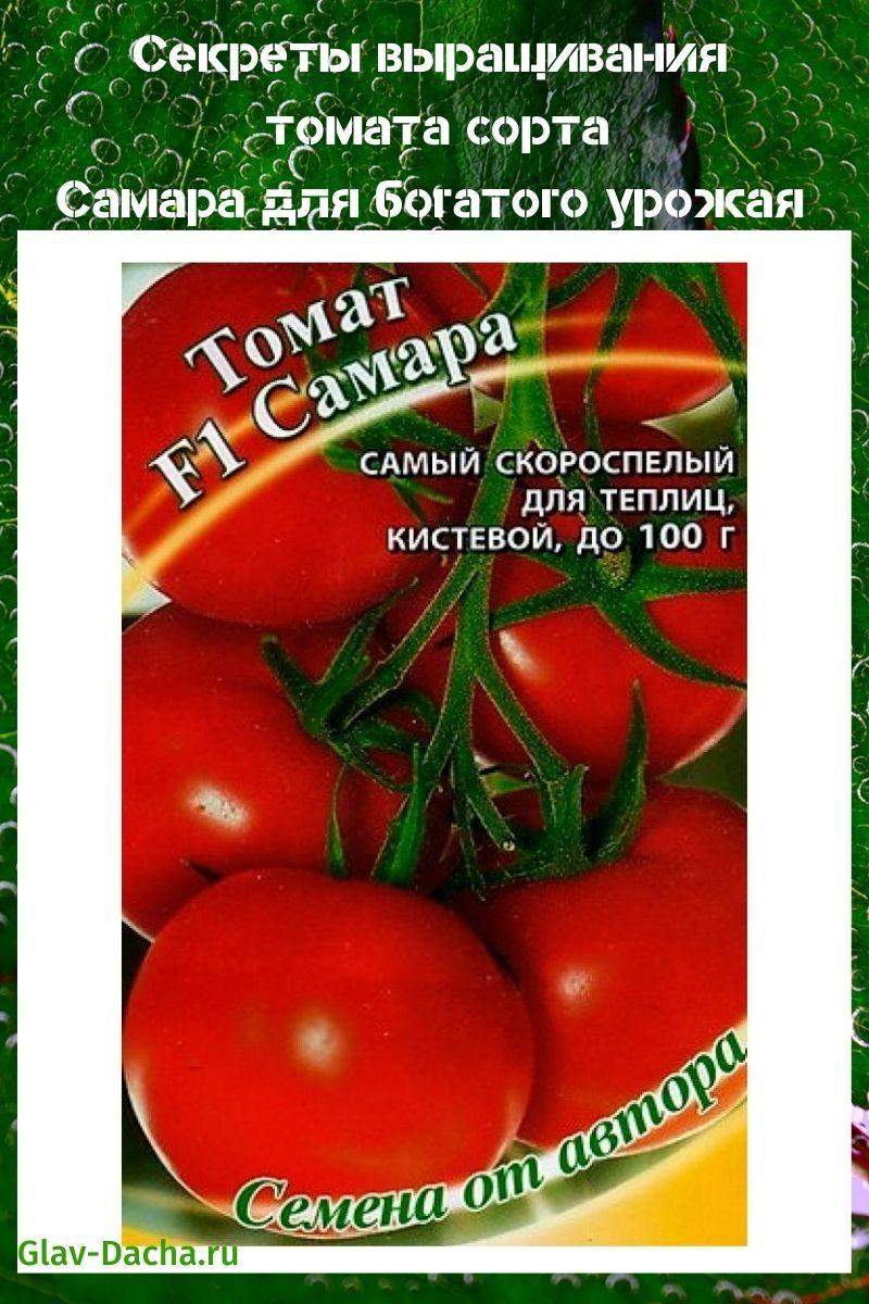 томат сорта Самара
