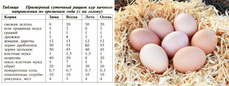 роль витаминов в питании кур несушек