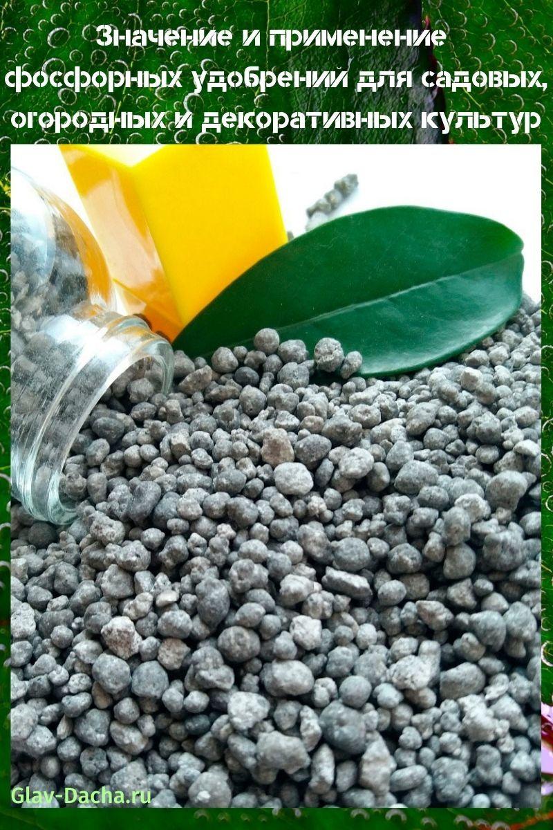 значение и применение фосфорных удобрений