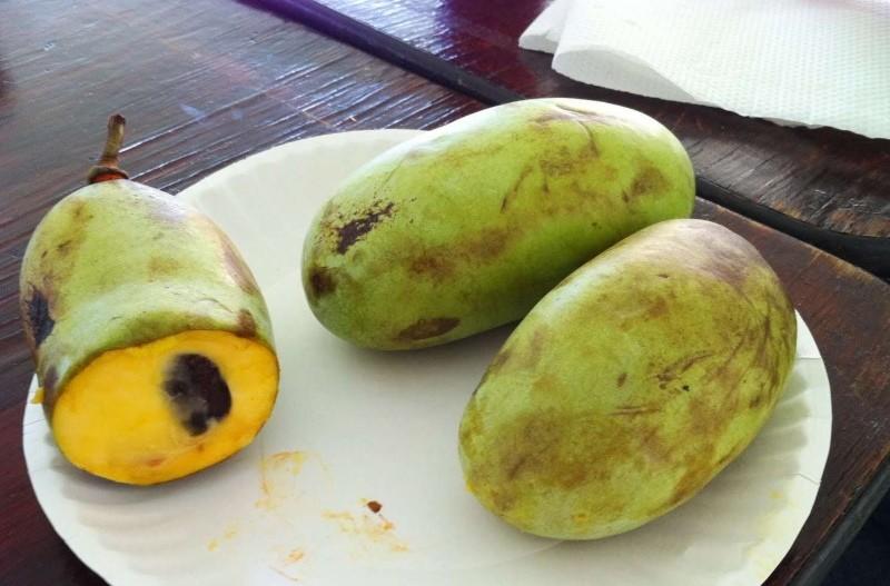 польза плодов азимины