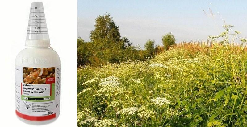 гербицид хармони против сорняков