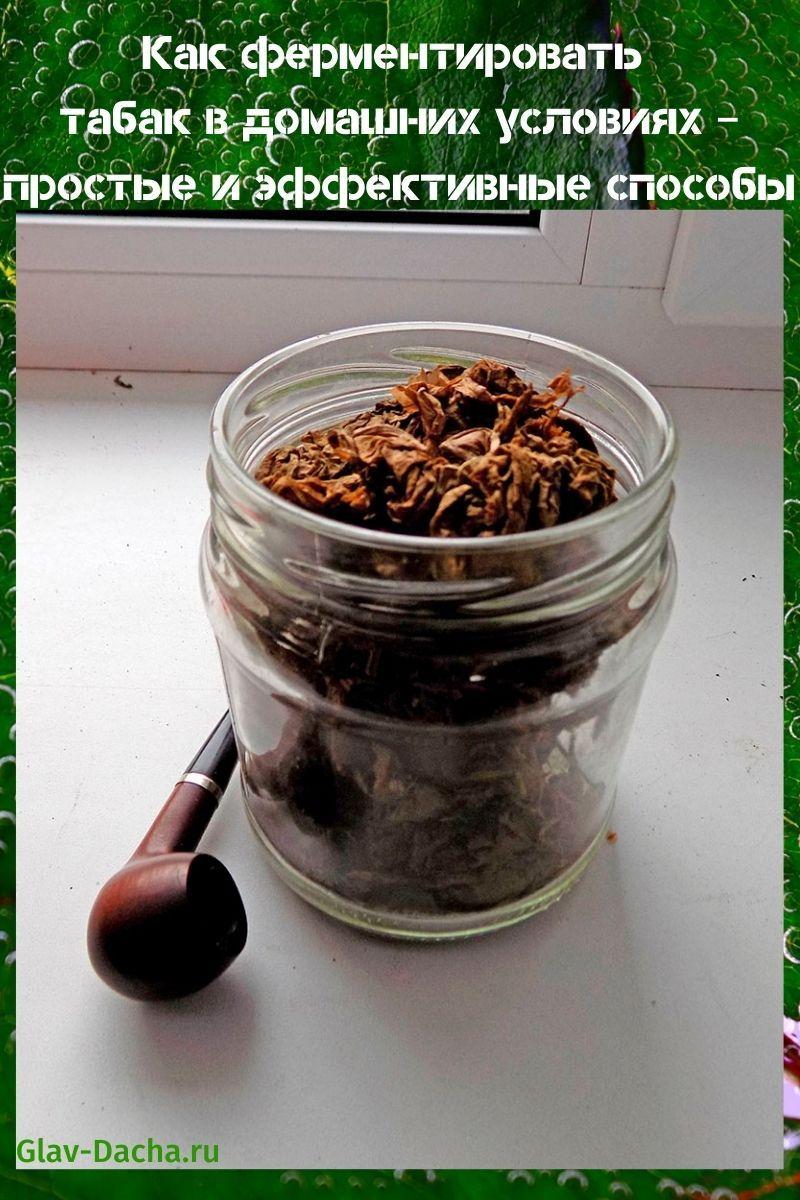 как ферментировать табак в домашних условиях