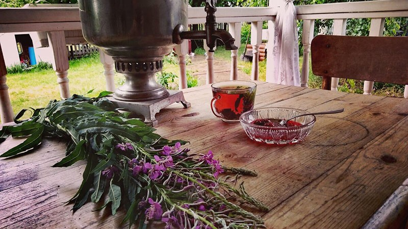 как вырастить иван-чай