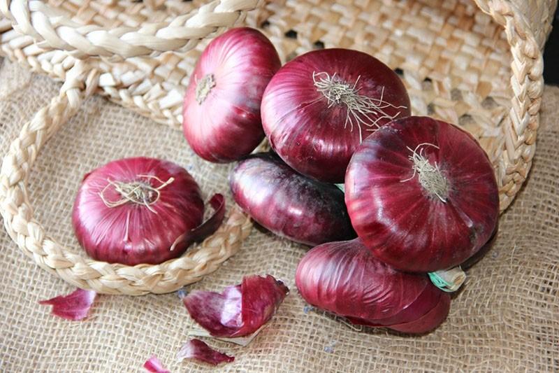 плоды ялтинского лука