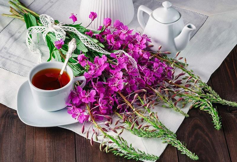 уникальный напиток из иван-чая