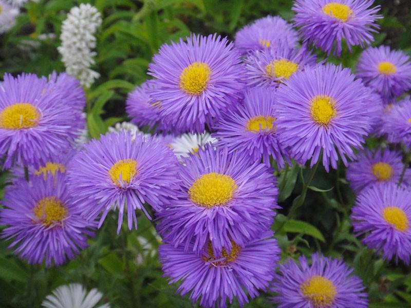ботанические особенности растения
