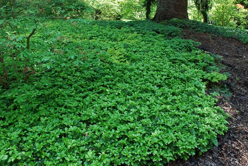 зеленое покрывало земли