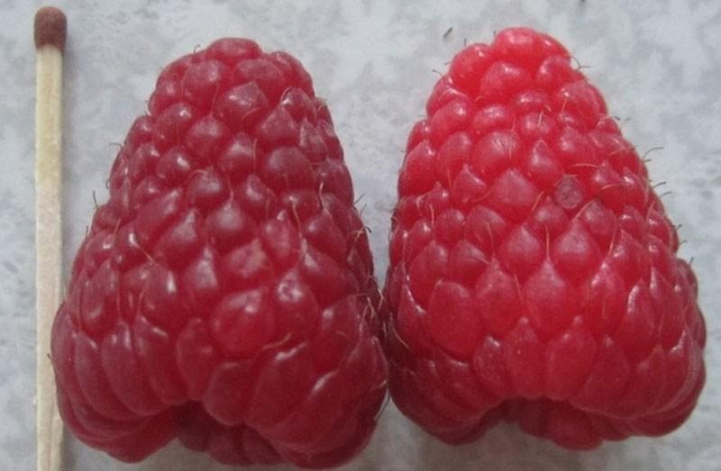 крупные ароматные ягоды