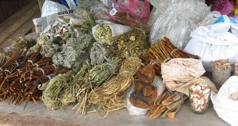 срок годности лекарственных трав