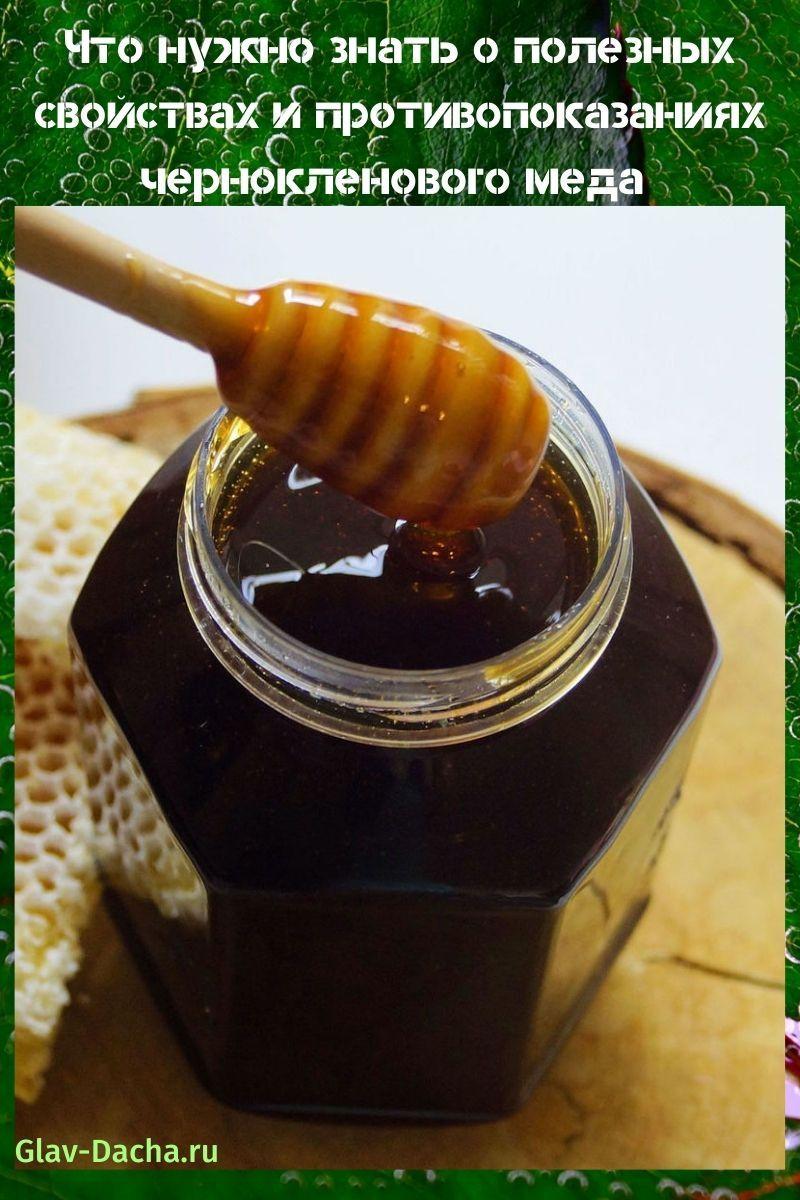 полезные свойства и противопоказания чернокленового меда